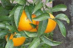 levensinspiratiesinaasappels gezondheid