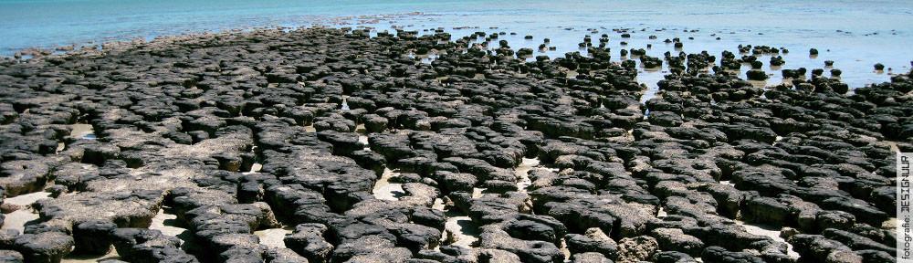 DESIGNUUR.nl fotografie stromatolieten