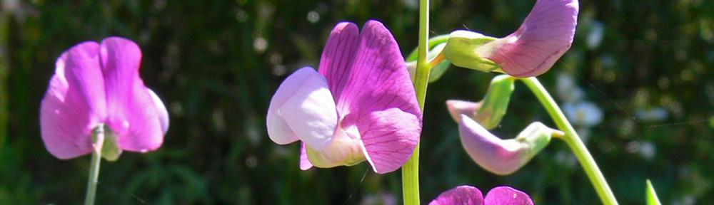 levensinspiratie paarse bloemetjes