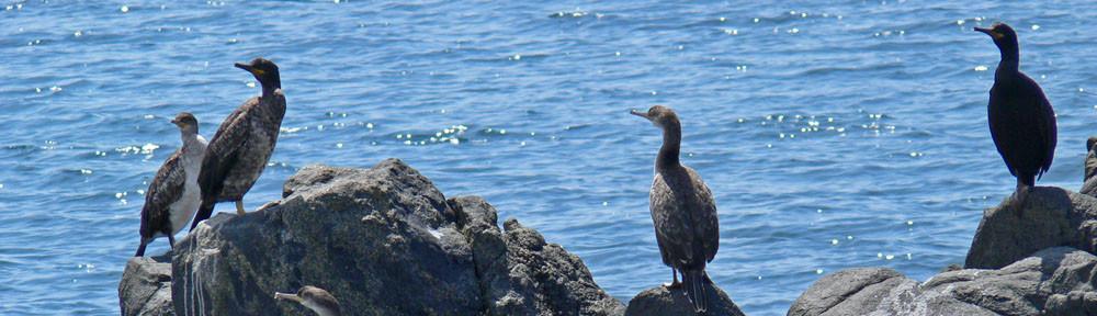 levensinspiratie vogels op rots