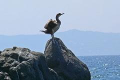 levensinspiratievogel-op-rots-aan-zee-vrijheid